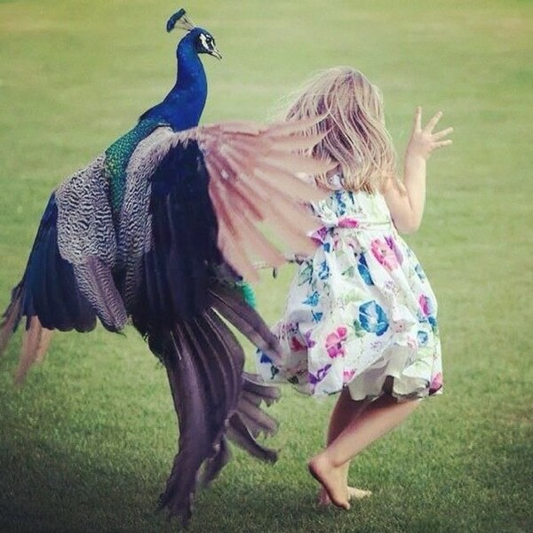 Little Girl Attacked By Bird.jpg