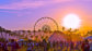 Surprising Facts About Coachella